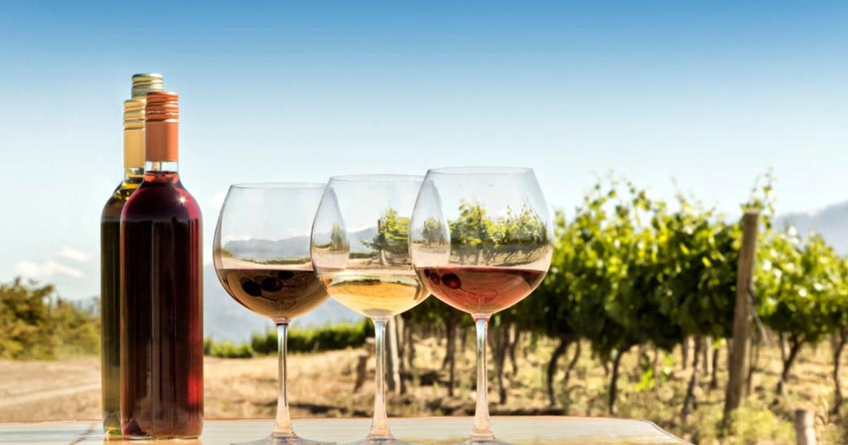 Disfruta de una deliciosa copa de vinos, en tu escapada a Navarra
