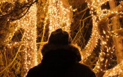 No te pierdas del Real Jardín Botánico 🎄 de Madrid en esta Navidad