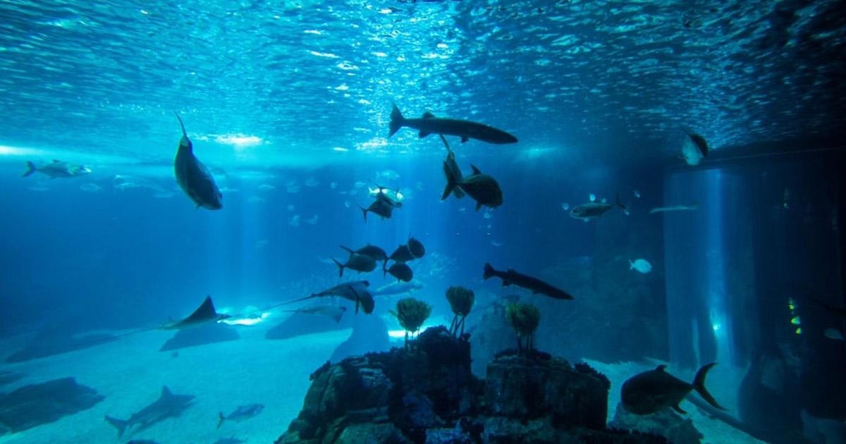 Visita el Oceanario de Lisboa, en tus vacaciones en Portugal con niños