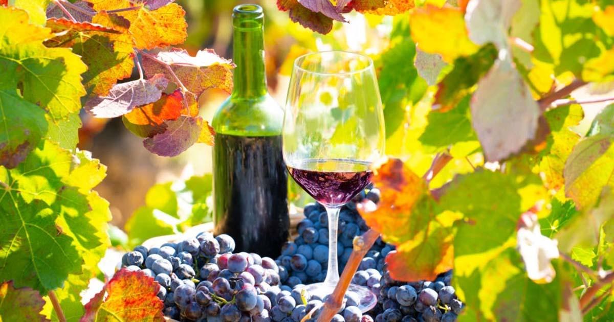 Chollos fin de semana con cata de vino incluida