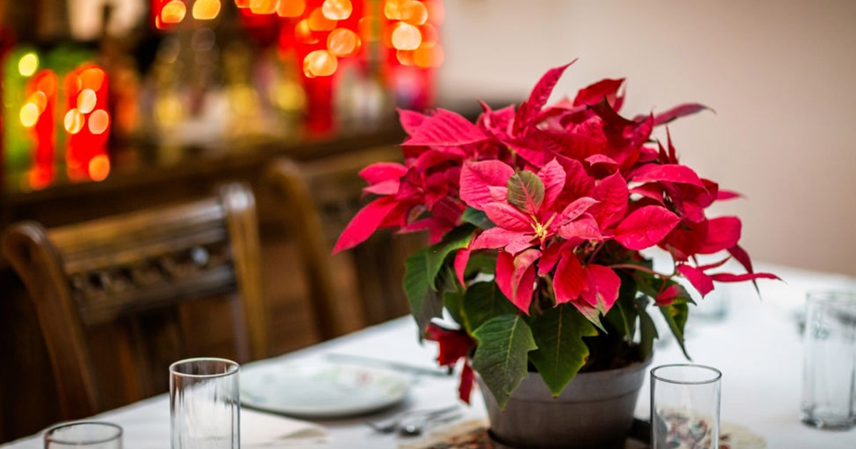 Decoración navideña sus elementos tradicionales