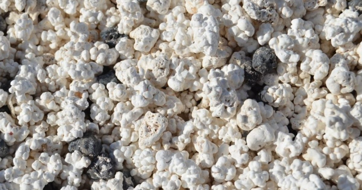 sorprendente con los fósiles de rodolitos